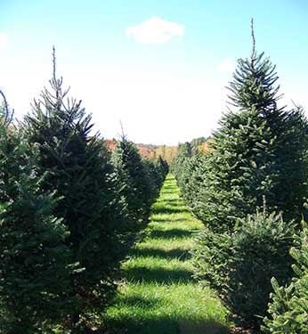 Bakersfield Tree Farm VT